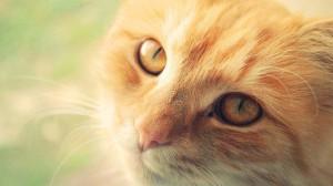 почему нельзя беременным гладить кошку