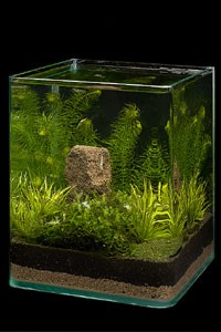 Классификация аквариумов