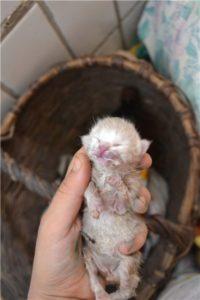 Как кормить маленьких котят самому