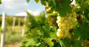 Одесский завод классических вин