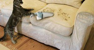 Чистый диван с помощью химчистки
