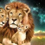 Мужчина лев + женщина лев. Совместимость в любви и браке